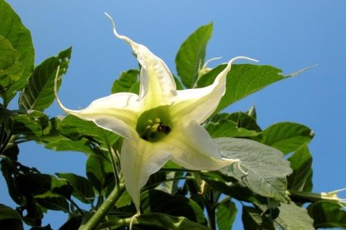 White flower by Rosseforp