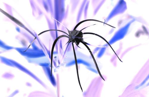 Strange flower by Rosseforp