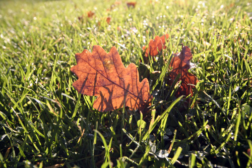 Autumn leaves by Rosseforp