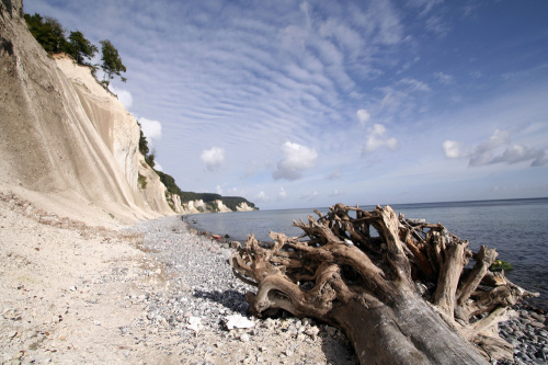 Tree trunk on the chalk coast of Rügen by Heinz Krimmer