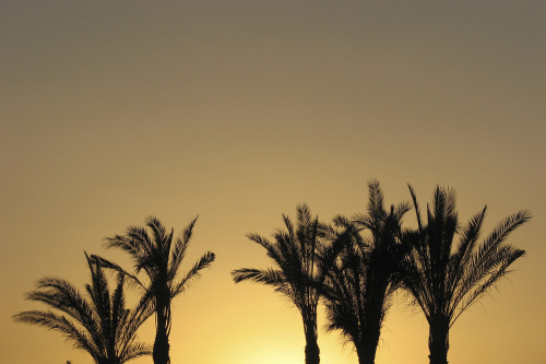Sunrise with palms, Egypt by Rosseforp