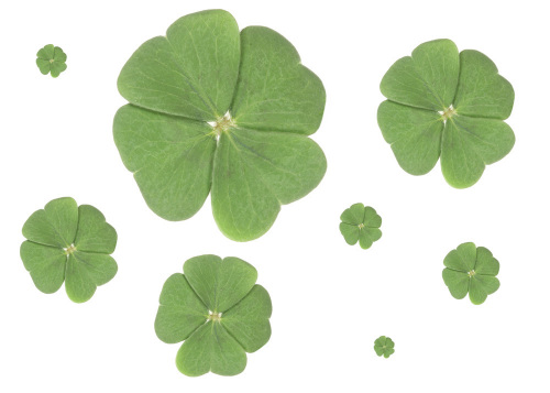 Four-leaf clover II by Rosseforp