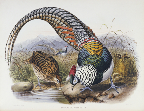 A Monograph Of The Phasianidae, 1872 by Daniel Giraud Elliot