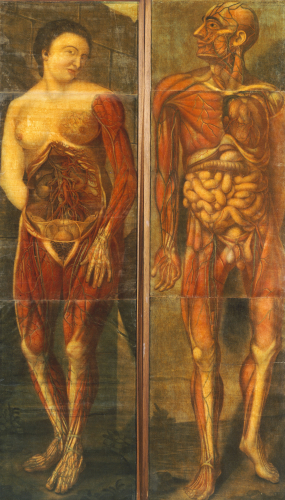 Anatomical Drawings Of Male And Female Figures, 1752 by Christie's Images