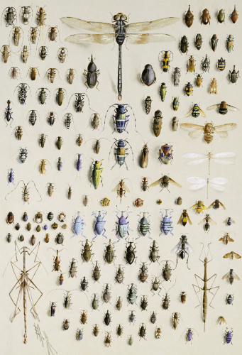 One Hundred And Fifty Insects, Dominated At The Top By A Large Dragonfly by Marian Ellis Rowan