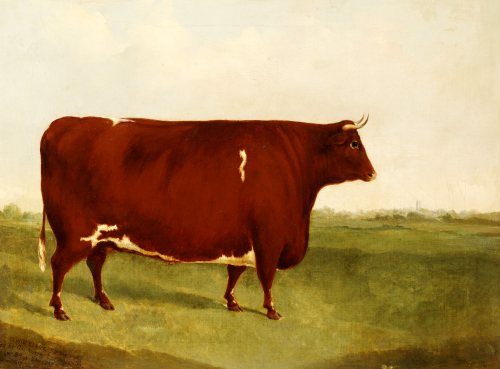 Twin Beast, A Shorthorn, Devon Cross Bull In A Meadow, A Village Beyond by G. Sinclair