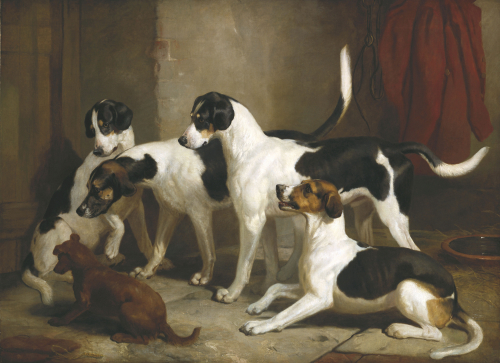 The Puckeridge Foxhounds: 'Rantipole', 'Rummager', 'Racer' And 'Reveller', 1845 by Thomas Woodward