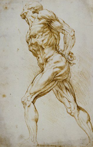 Anatomical Study: A Nude Striding to the Right, his Hands Behind his Back by Peter Paul Rubens