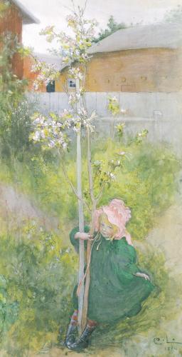Appleblossom, 1894 by Carl Larsson