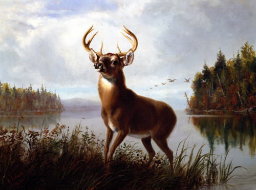 Eight Point Stag by Arthur Fitzwilliam Tait