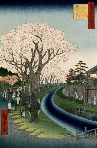 Cherry Blossoms, Tama River Embankment by Christie's Images