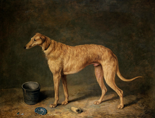 A Deerhound In A Stable Interior by James Barenger