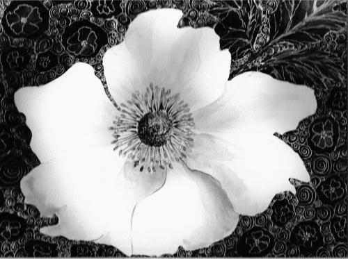 Japanese Anemone by Luisa Gaye Ayre