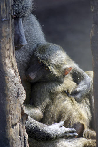 Mother and baby by Wayne Williams