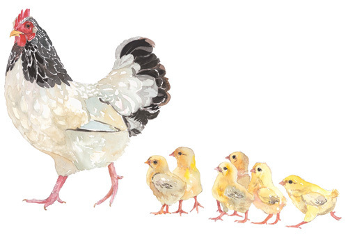 Light Sussex Hen with Chicks by celia lewis
