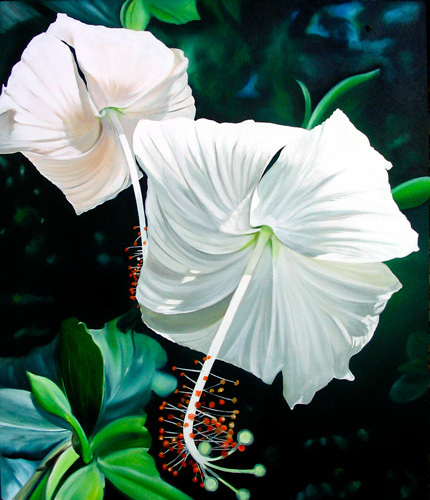 Hibiscus Blancas by James Knowles