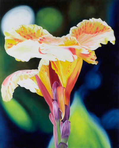 Tiger Lily by James Knowles