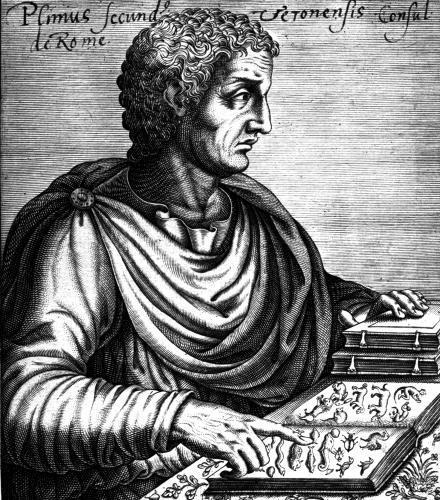 Pliny the Elder by French School
