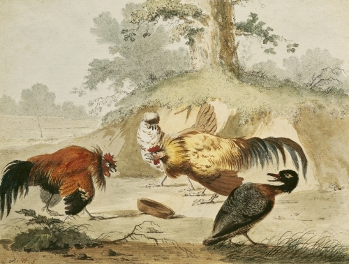 Cocks Fighting by Melchior de Hondecoeter