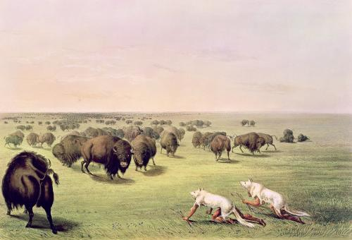 Hunting Buffalo Camouflaged with Wolf Skins c.1832 by George Catlin
