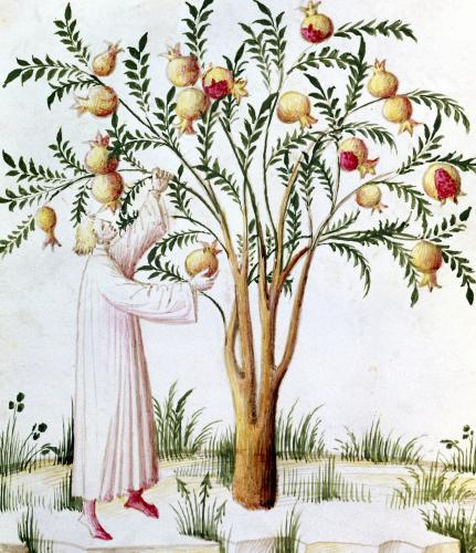Gathering bitter pomegranates by Italian School