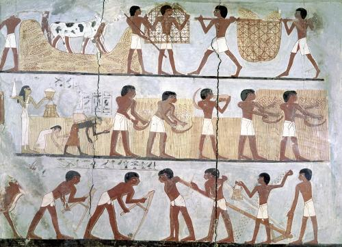 Scenes of sowing and harvesting from the Tomb of Unsou by Egyptian Art