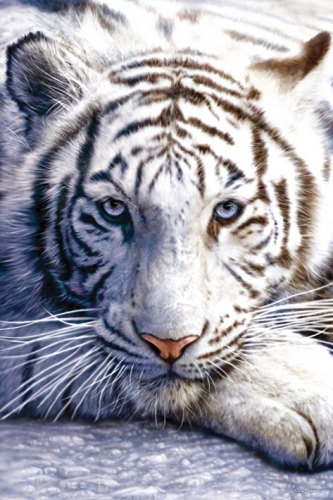 White Tiger by Maxi