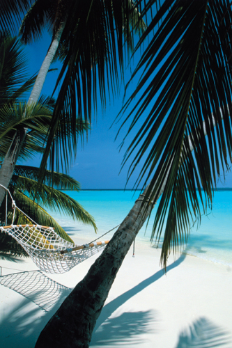 Palm View (Hammock) by Maxi