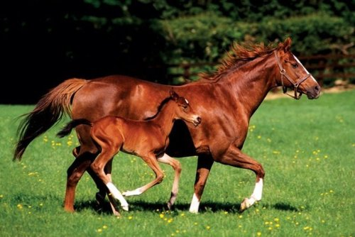 Mare & Foal by Anonymous
