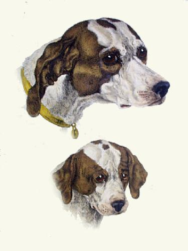 Hounds Head (Restrike Etching) by Sir Edwin Henry Landseer