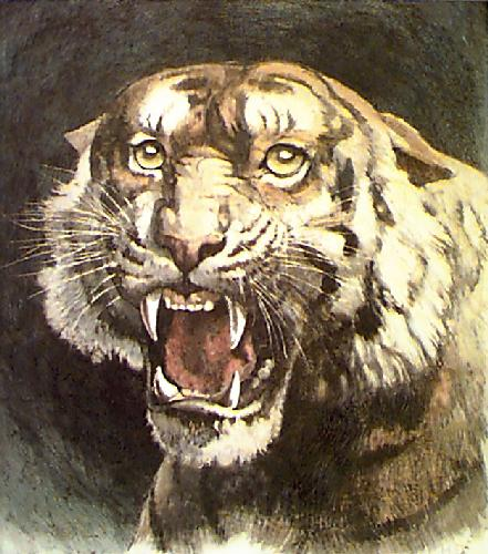 Tiger's Head (Restrike Etching) by Herbert Thomas Dicksee