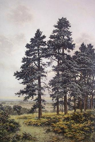 Surrey Pines (Restrike Etching) by Benjamin Williams Leader