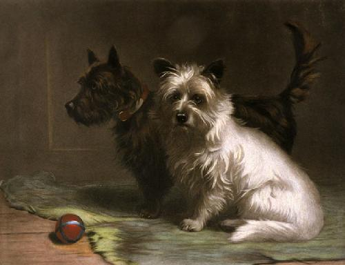 Scottie & Khaki (Restrike Etching) by Margaret Collyer