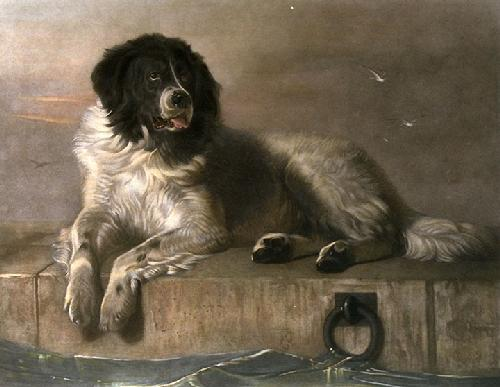 Distinguished Member of the Humane Society (Restrike Etching) by Sir Edwin Henry Landseer