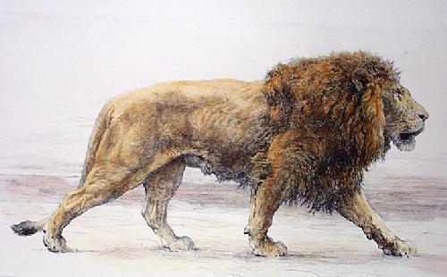 Lion Stalking (Onward) (Restrike Etching) by Herbert Thomas Dicksee