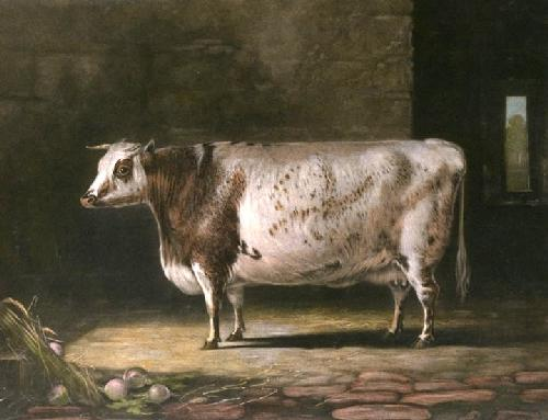 Cow, Bracelet (Restrike Etching) by Percy Forster