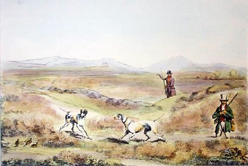 Grouse (Restrike Etching) by Henry Alken