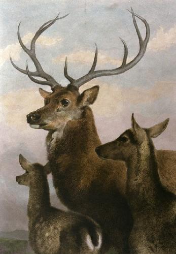 Deer Family (Restrike Etching) by Sir Edwin Henry Landseer