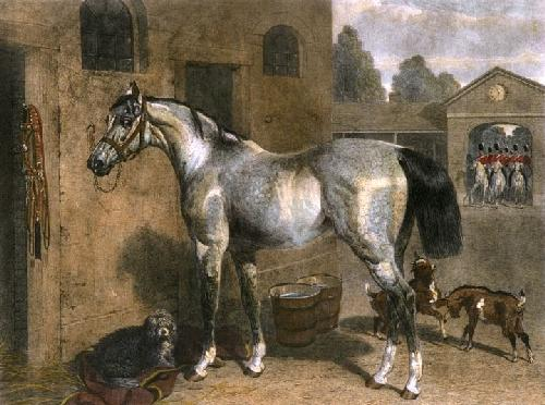 Cavalry Horse (Restrike Etching) by John Frederick Herring