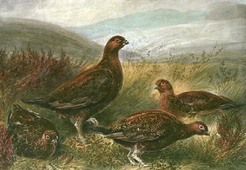 Grouse (Restrike Etching) by Frank J. Short