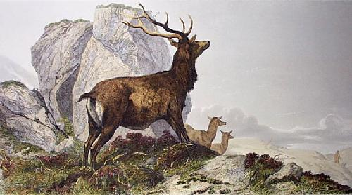 Deer Disturbed (Restrike Etching) by Richard Ansdell