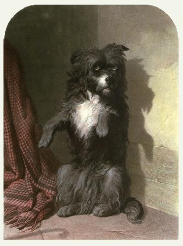 Naughty Dog (Restrike Etching) by A Davis Cooper