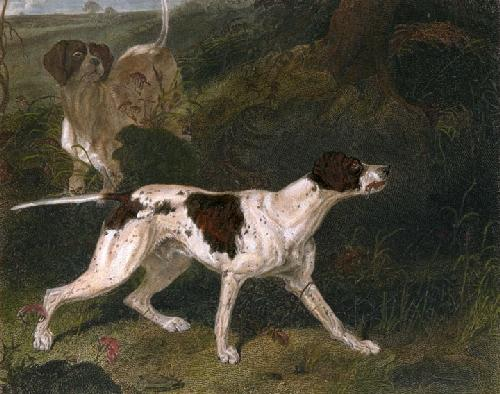 The Pointer (Restrike Etching) by Ward