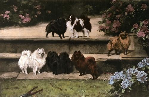 Pomeranians (Restrike Etching) by Arthur Wardle