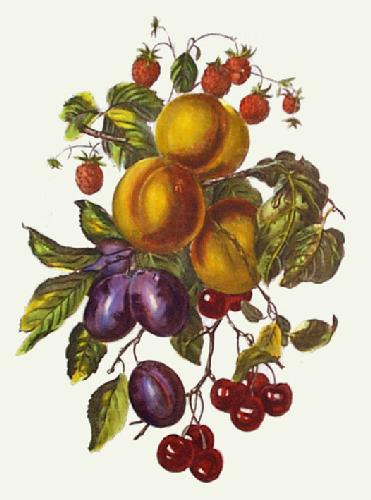 Apricots, Plums, and Strawberries (Restrike Etching) by Anonymous