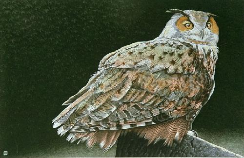 Eagle Owl (Restrike Etching) by Alex Mackay