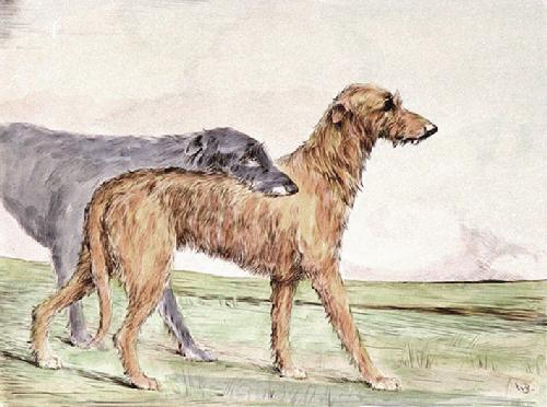 Irish Wolfhound (Restrike Etching) by Anonymous