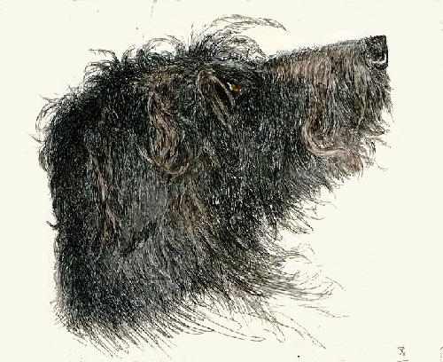 Deerhound Head (Restrike Etching) by Harber