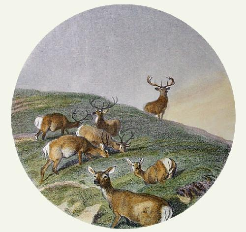 Deer In A Circle (Restrike Etching) by Sir Edwin Henry Landseer