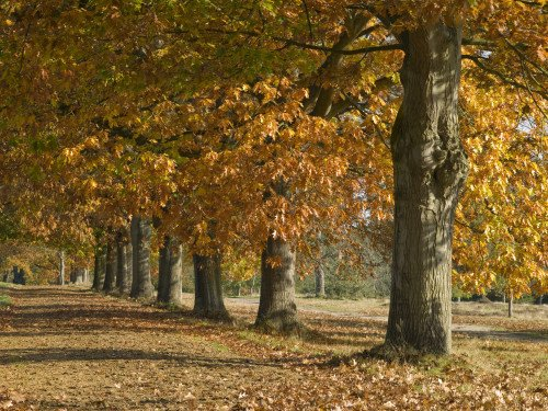 Autunm leaves on row of trees by Assaf Frank